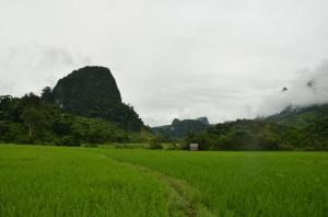 Arrozales en Muang Noi